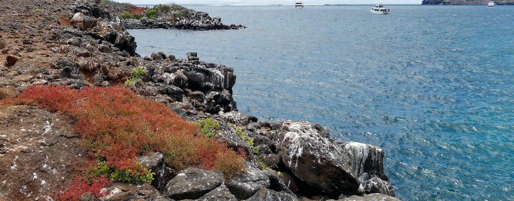 Excursion d'une journée à Seymour North Island et Las Bachas avec déjeuner