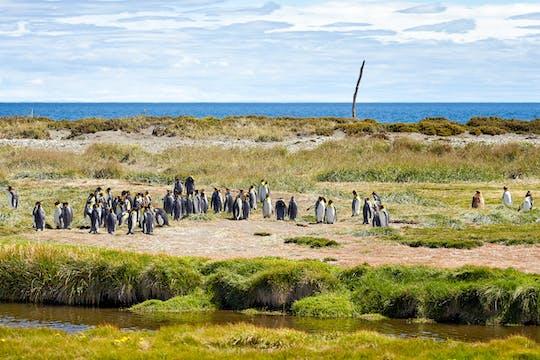 Tour di un'intera giornata a Tierra del Fuego e King Penguin Park