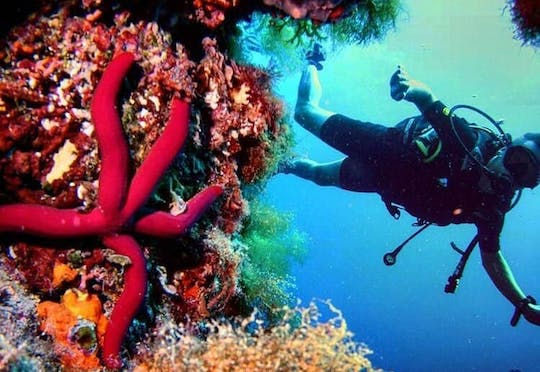Open Water Diving Course with Norway Dive