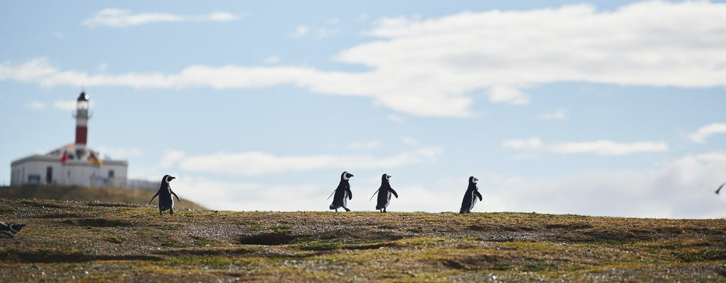 Tour naar de eilanden Marta en Magdalena vanuit Punta Arenas