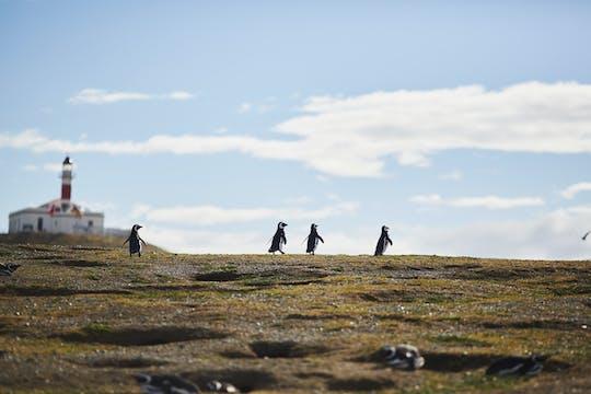 Marta- und Magdalena-Inseln Tour von Punta Arenas