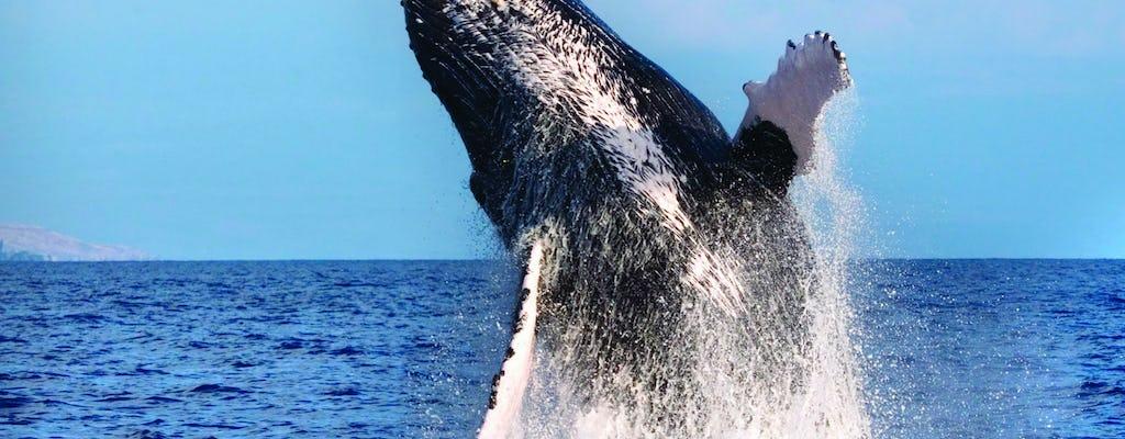 Cruzeiro para observação de baleias em West Oahu