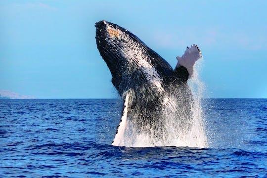 Crociera per l'avvistamento delle balene a West Oahu