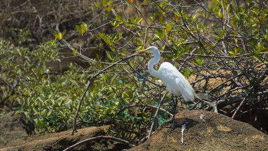 Puerto del Morro, Bird Island and dolphin watching tour