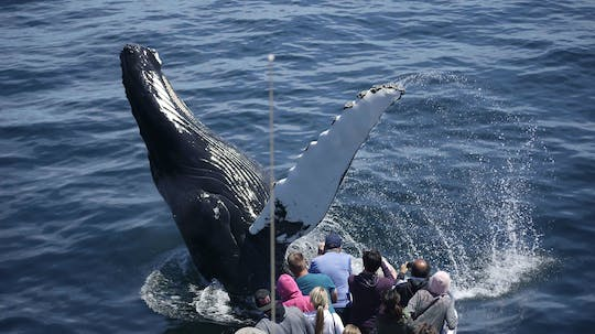 New England Aquarium whale watching tour