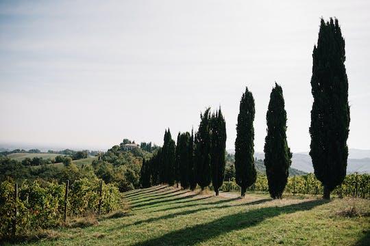 Tour pela vinícola Venturini Baldini com degustação de vinho e vinagre