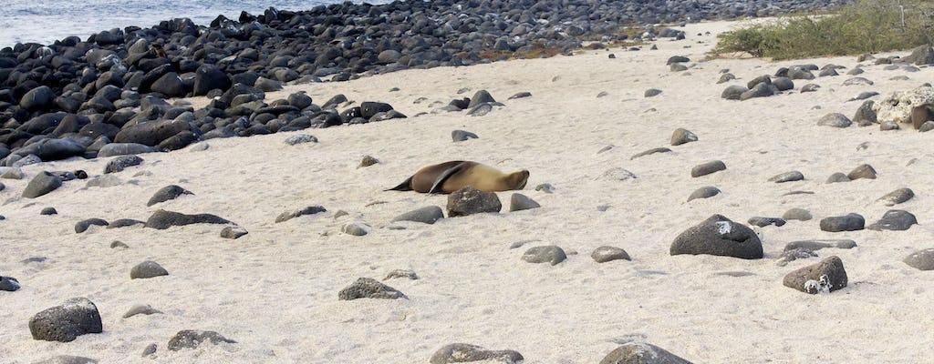 Lobos Island guided tour from San Cristobal Island