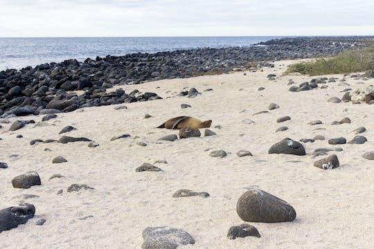 Visita guiada à Ilha de Lobos saindo da Ilha de San Cristobal