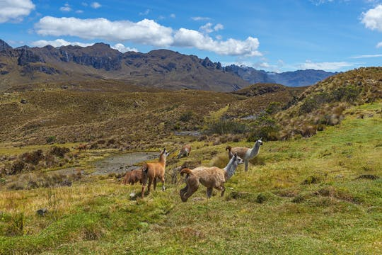 Cajas National Park tour with cocoa farm visit from Guayaquil or Cuenca