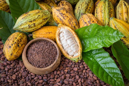 Cacao farm excursion from Guayaquil