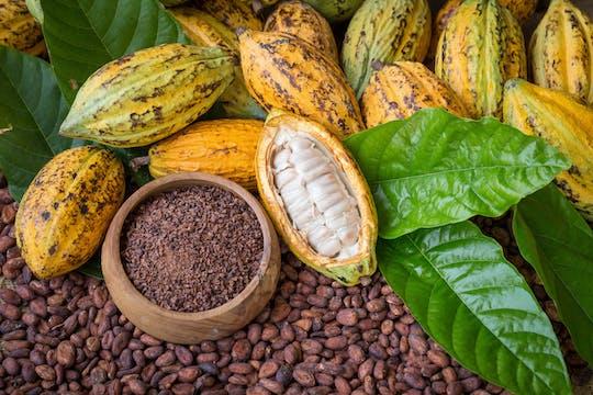 Wycieczka na farmę kakao z Guayaquil
