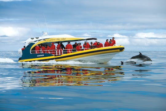 Tasman Island 3-hour wilderness cruise