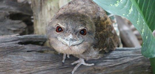 Ingresso allo ZOOM di Cairns e al Wildlife Dome