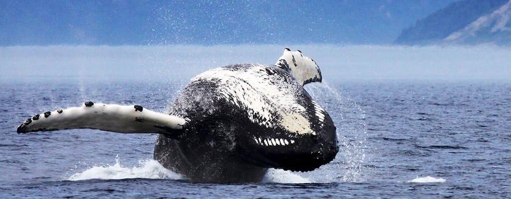 Rejs z obserwacją wielorybów Tadoussac