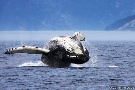 Tadoussac whale watching cruise