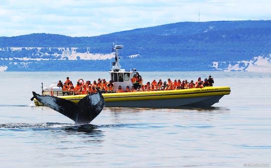 """Тадуссаке наблюдение за китами круиз на лодке """"Зодиак"""""""