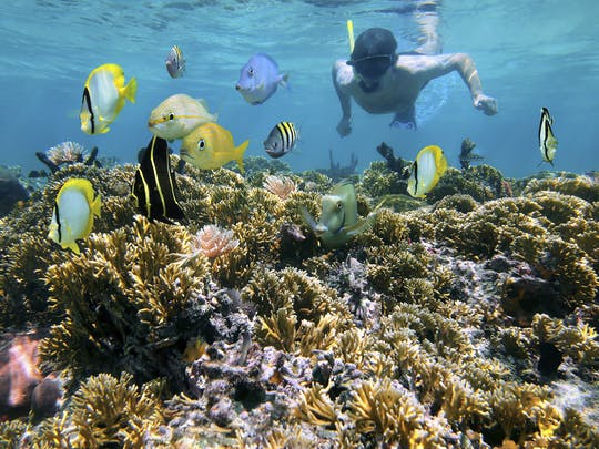 Snorkeling tour from RIU Atoll and RIU Palace Maldivas