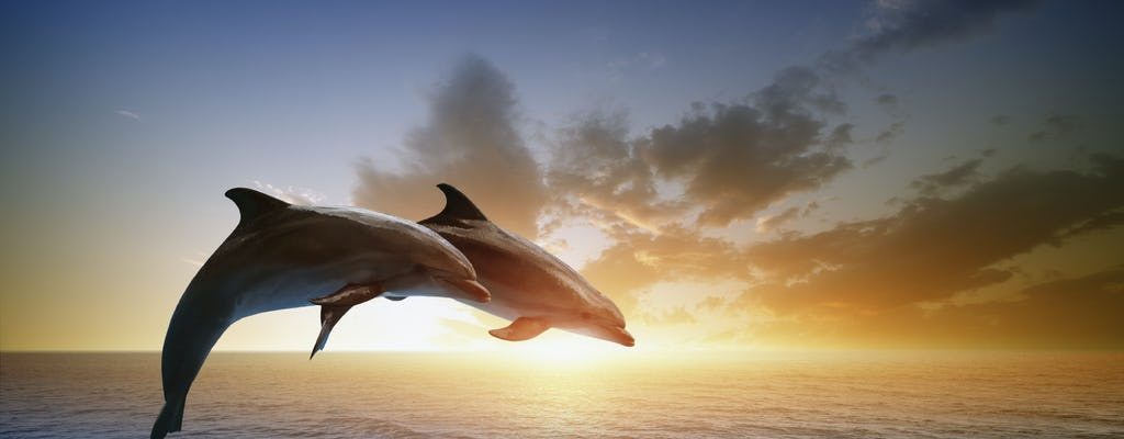 Busca de golfinhos de RIU Atoll e RIU Palace Maldivas