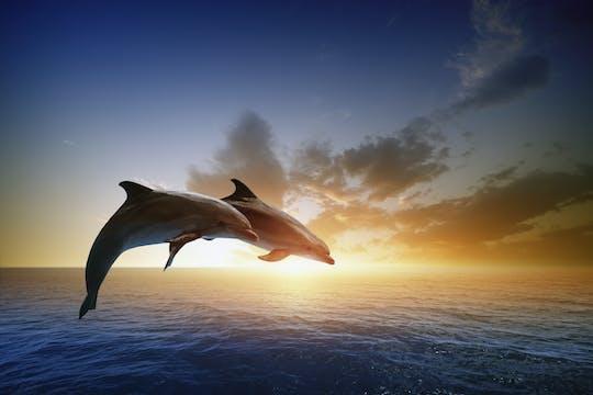 Dolfijnenquest van RIU Atoll en RIU Palace Maldivas