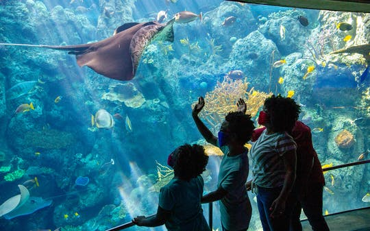 Tickets voor Aquarium of the Pacific