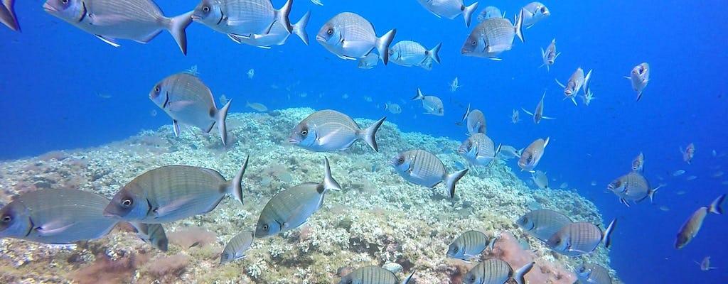 Blue Water Scuba Diving Beginner Experience