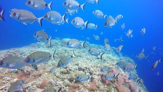 Doświadczenie dla początkujących w nurkowaniu w błękitnych wodach