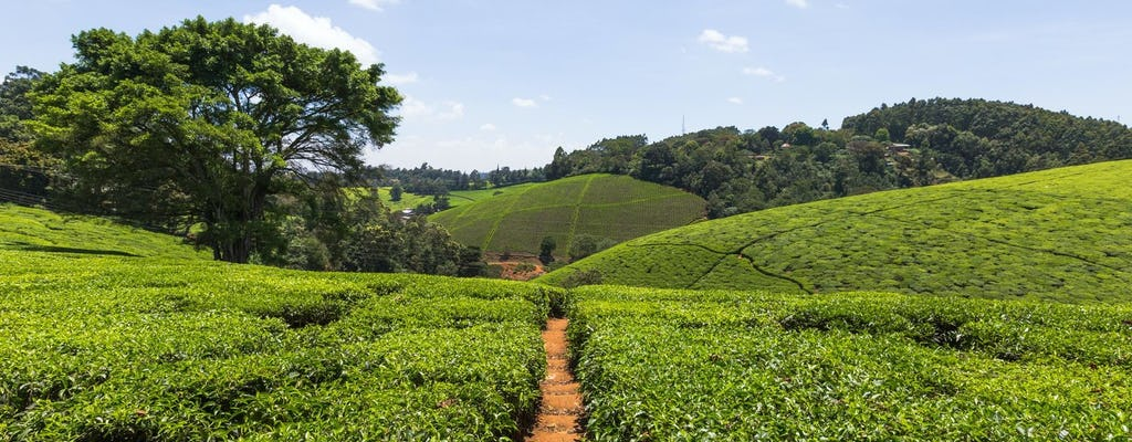 Kiembethu Tea Farm tour from Nairobi