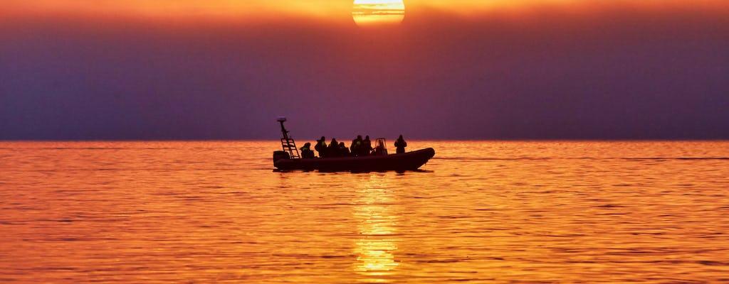 Mitternachtssonnen-Safari mit einem Hochgeschwindigkeits-RIB-Boot