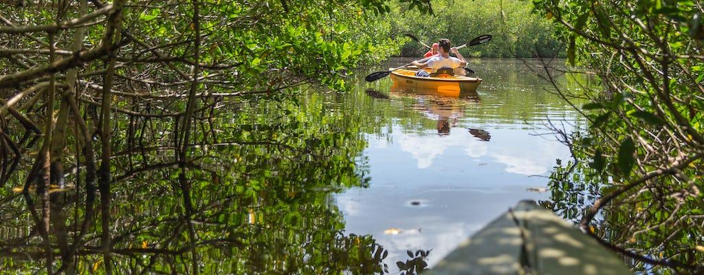Excursion écologique privée en kayak dans le tunnel de la mangrove