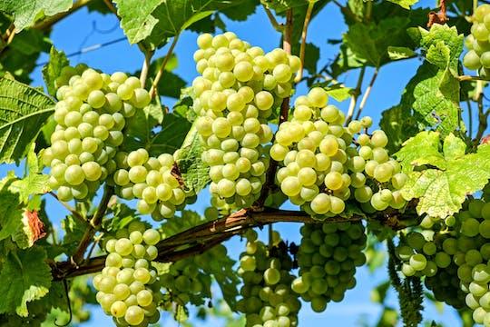 Baranja - Region der Weine