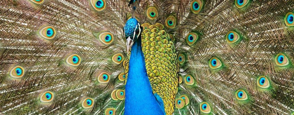 Pafos Zoo Tour