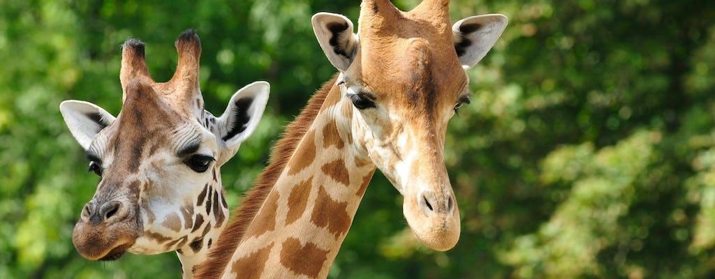 Bezoek Pafos Zoo & Blue Lagoon Cruise