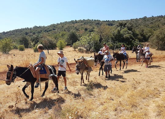 Half-day Donkey Tour with Transport