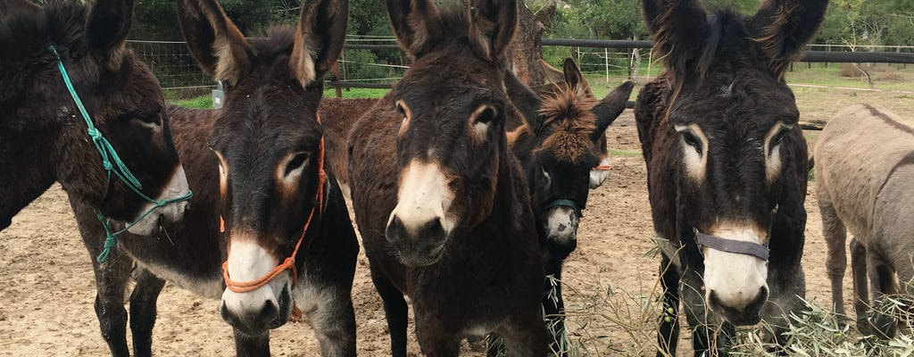 Paderne Donkey Farm Tour