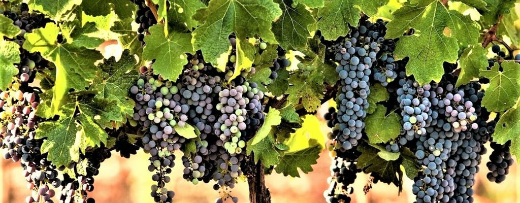 Prywatna wycieczka winiarska po północnym Izraelu