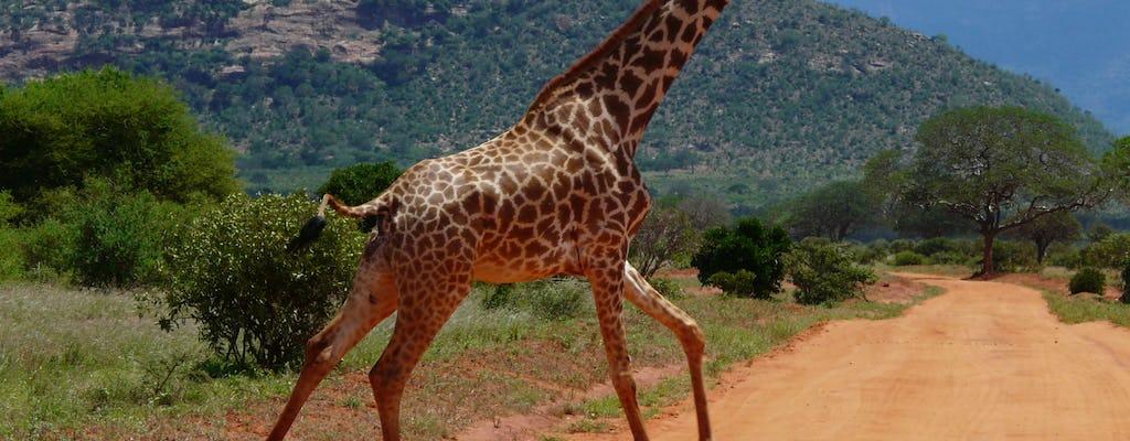Tsavo East overnight safari at Sentrim Tsavo Camp