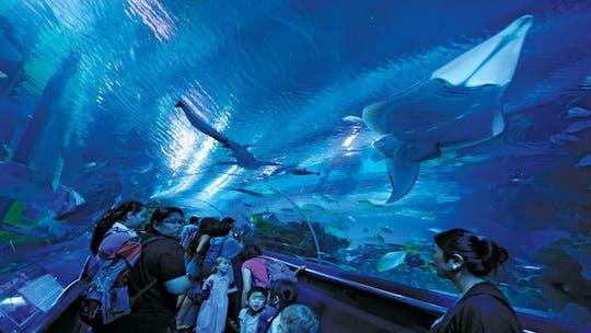 Bilet wstępu do Aquaria KLCC z odbiorem z hotelu