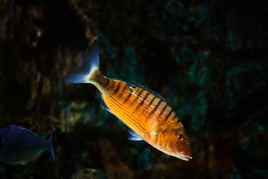 Ocean Aquarium – Eintrittskarte