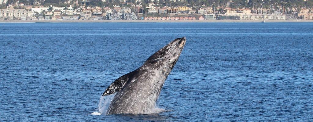 Cruzeiro de luxo para observação de golfinhos e baleias com Oceanside Adventures