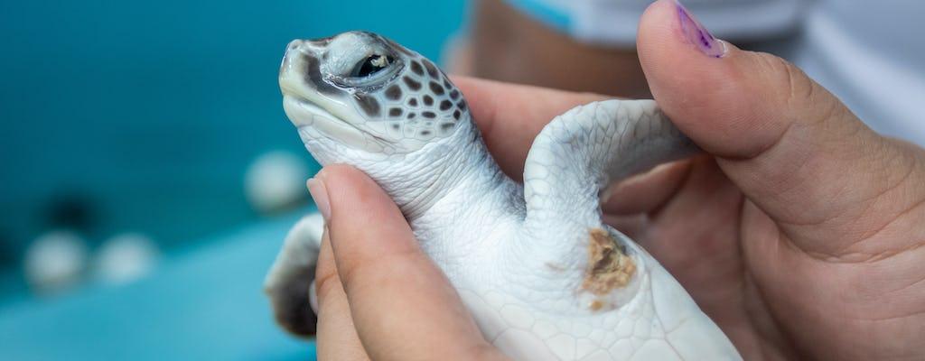 Happy hour con le tartarughe marine a Ravenna