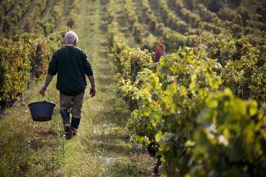 Half-day private tour of the South Beaujolais including tasting