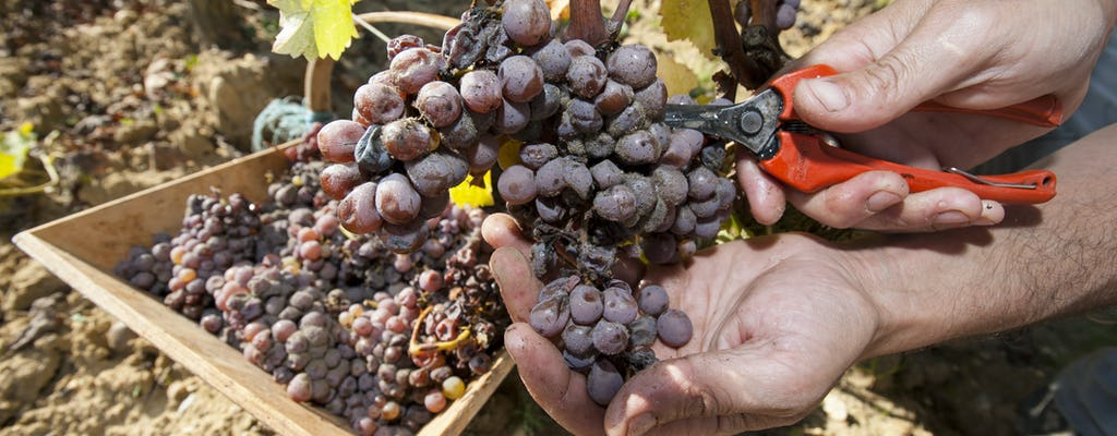 Graves & Sauternes Wine Tour particular de dia inteiro saindo de Bordeaux