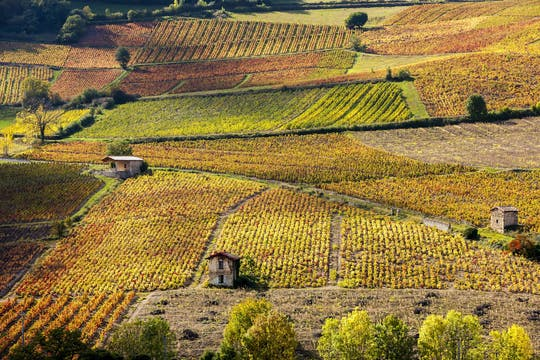 Beaujolais  private wine tour