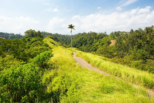 Full day Ubud insiders tour