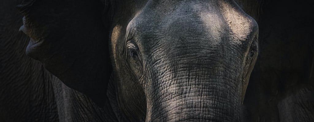 Passeio da Millennium Elephant Foundation saindo de Kandy