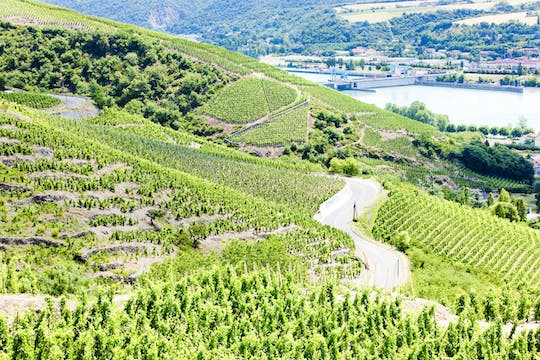 Half-day private wine tour in the Northern Rhône Valley