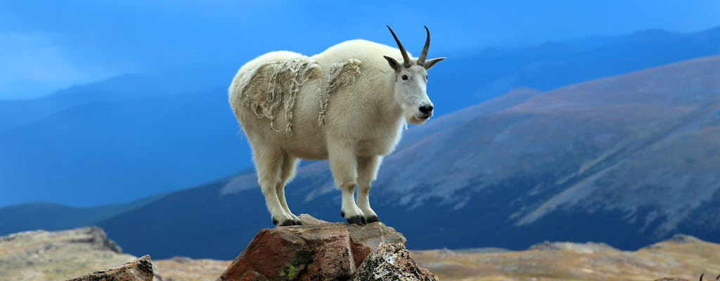 Mount Evans und Red Rocks Tour ab Denver