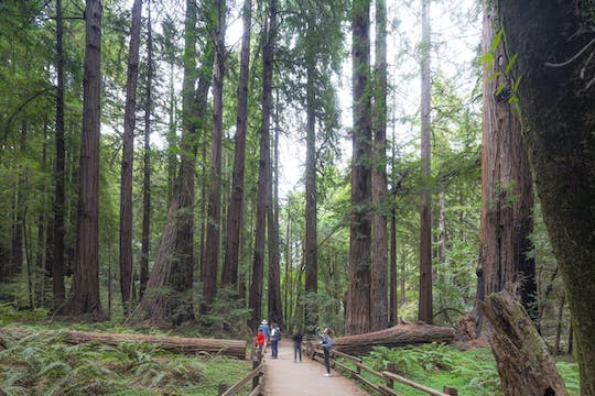 Tour di Muir Woods e Sausalito con crociera Escape from the Rock