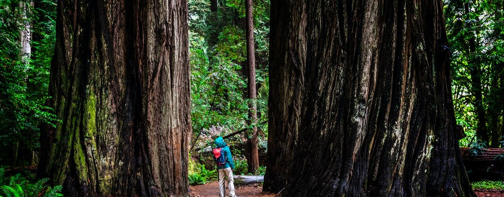 California Redwoods & Wine Country Tour