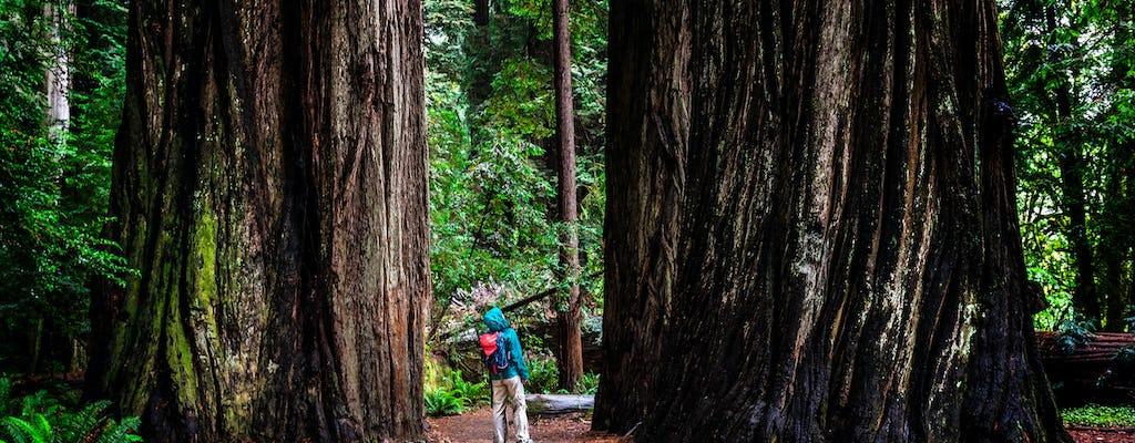 Tour pelas redwoods da Califórnia e Wine Country